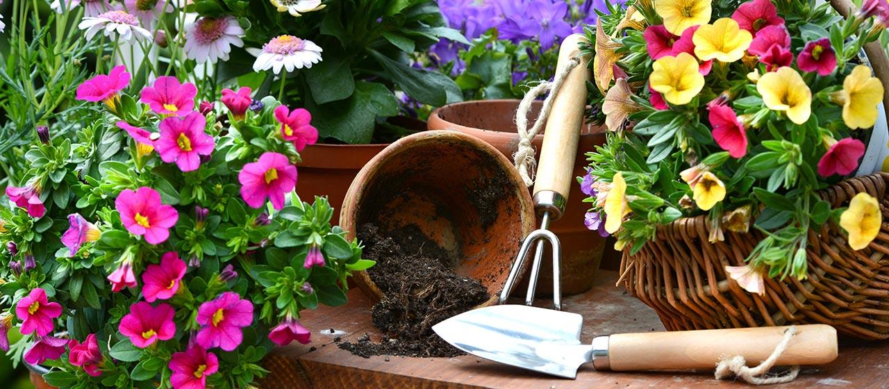 001ea20bdf9b Ingrosso giardinaggio - Frescura Spa - Rivenditore Bama, Ipierre ...